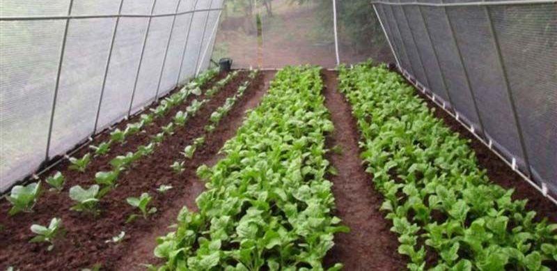 सहकारीले थाल्यो बाँझो जमिनमा एकीकृत कृषि